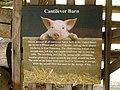 Cantilever Barn P9080657.jpg