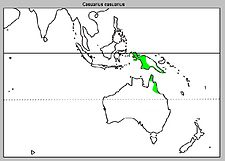 Casuariuas casuarius Distribution map.jpg