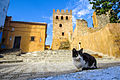 Cat151, citizen of Chefchaouen (23338373932).jpg