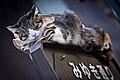 Cat in Ginza.jpg