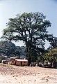 Ceiba de Zontecomatlán Vista 01008.jpg
