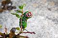 Cerura vinula caterpillar 2.jpg