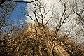 Cheile Vârghișului - Varghis Gorges - panoramio (21).jpg