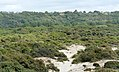 Chemin Paysage de la Réserve naturelle nationale de la baie de Canche aout 2017b3.jpg