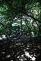 City of London Cemetery inside yew copse 2.jpg