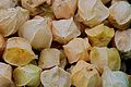 Clammy Ground Cherries.jpg