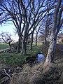 Clayholes Wood - geograph.org.uk - 76135.jpg