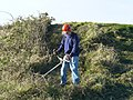 Clearing blackthorn and bramble - geograph.org.uk - 1064696.jpg