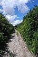 Climbing Old Shaftsbury Drove - geograph.org.uk - 498697.jpg