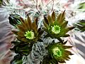 Closeup of cactus.jpg