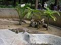 Cocodrilos caracas zoo.jpg