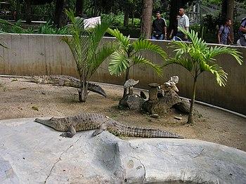 Cocodrilos caracas zoo