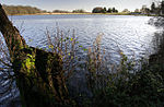 Cole Mere From the footpath on the SW side. December 2004.