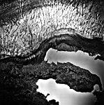 Columbia Glacier, Valley Glacier Edge, Terminus, September 15, 1975 (GLACIERS 1274).jpg