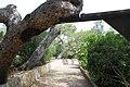 Compendio Garibaldino - vialetto con pini.jpg