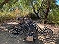 Comporta bikes.jpg