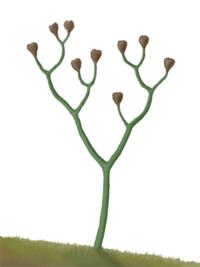 Las algas de una prima mayor - 2 part 7