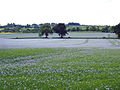 Cotswolds linseed field 1.jpg