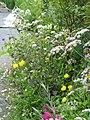 Cottage border - Flickr - peganum.jpg