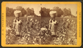 Cotton field, by J. A. Palmer 12.png