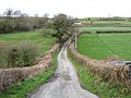 Country lane - geograph.org.uk - 146863.jpg