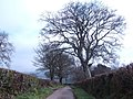 Country lane in East Devon - geograph.org.uk - 424685.jpg