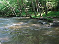 Crabtree Creek Company Mill Trail Umstead NC SP 0104 (3583881796).jpg