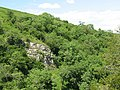 Crag Wood, Smardale Gill - geograph.org.uk - 1406714.jpg