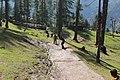 Cricket on mountain.jpg