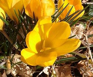 British horticulturist