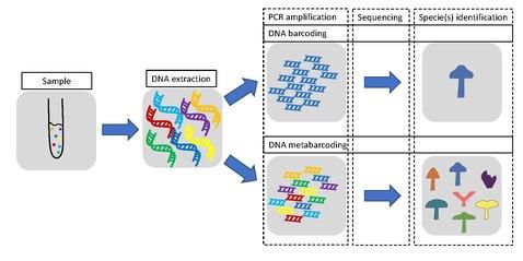 DNA barcoding - Wikipedia