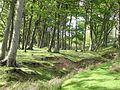 Dam Howe - geograph.org.uk - 450139.jpg