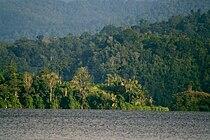 Danau Lindu w bird 2007.jpg
