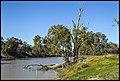 Darling River Bourke-1 (21350579071).jpg
