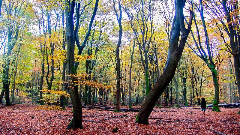 File:De-Hoge-Veluwe-Autumn.jpg