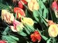 File:De Westfriese Flora-526112.ogv