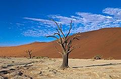 Dead Vlei Tree.jpg