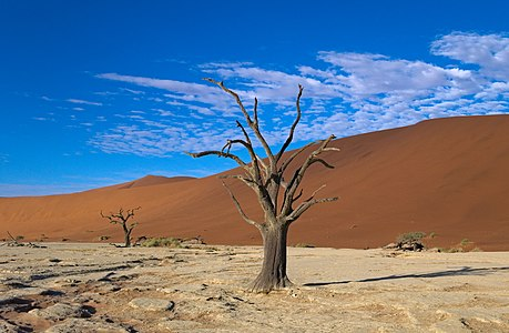 "Old tree in ""Dead Vlei"", Namibia"