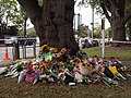 Deans Ave flowers.jpg