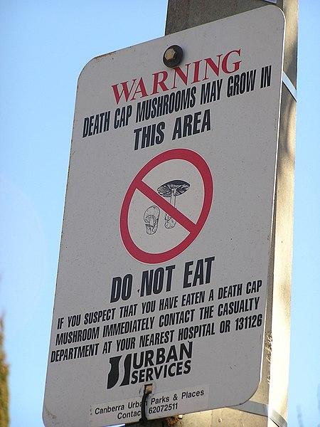 File:Death Cap Mushroom.jpg