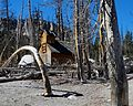 Death by Carbon Dioxide, Horseshoe Lake, Mammoth, CA 2016 (32011250720).jpg