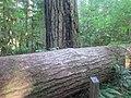 Delta Campground (15109184560).jpg
