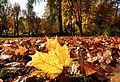 Der Bad Mergentheimer Kurpark im Herbst. 15.jpg