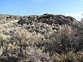 Desert ecology (3070986173).jpg