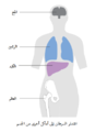 Diagram showing stage 4 breast cancer CRUK 228-ar.png
