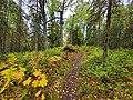 Discovery Trail.jpg