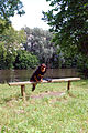 Dog on a bench (2664327999).jpg