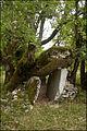 Dolmen des agars à Saint Chels.jpg