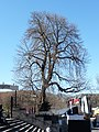Domplatz (Erfurt) 07.jpg