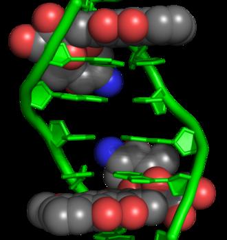 Anthracycline - Doxorubicin as an intercalating agent. Two doxorubicin molecules intercalated within DNA.
